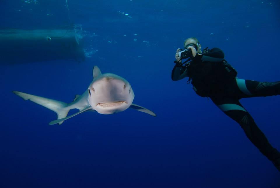 Nadar com tubarões - Ilha do Faial, Açores