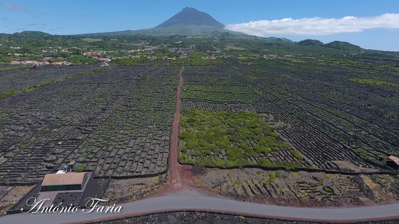 """Imagens arrepiantes da """"Paisagem da Vinha"""" na Ilha do Pico"""
