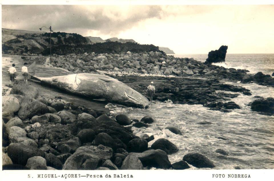 Pesca da Baleia - São Miguel - Açores (História dos Açores)