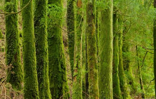 Verde da Natureza