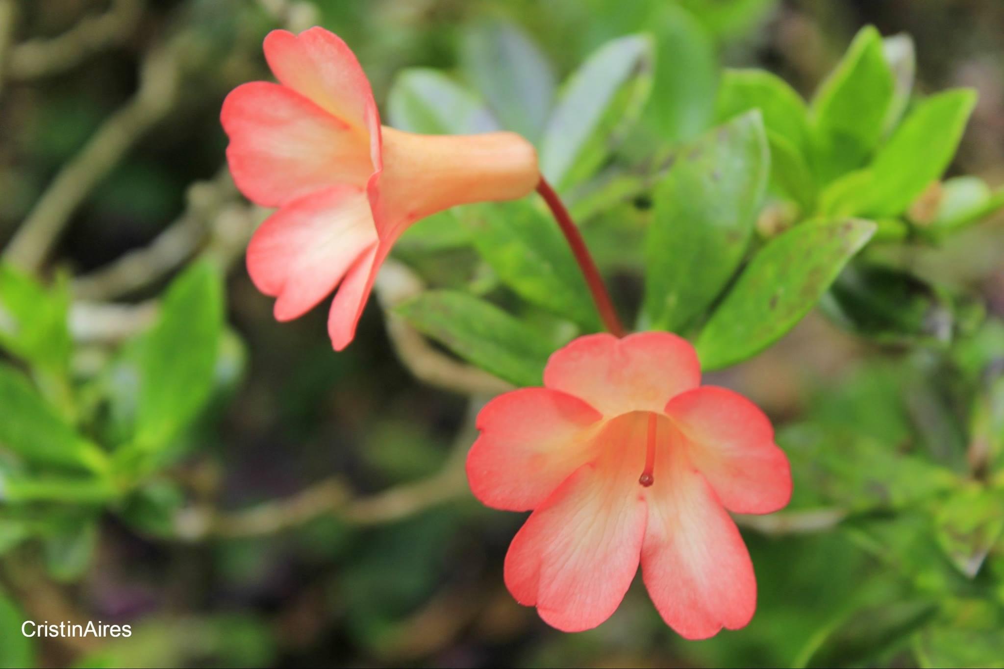 Flor – Parque Terra Nostra