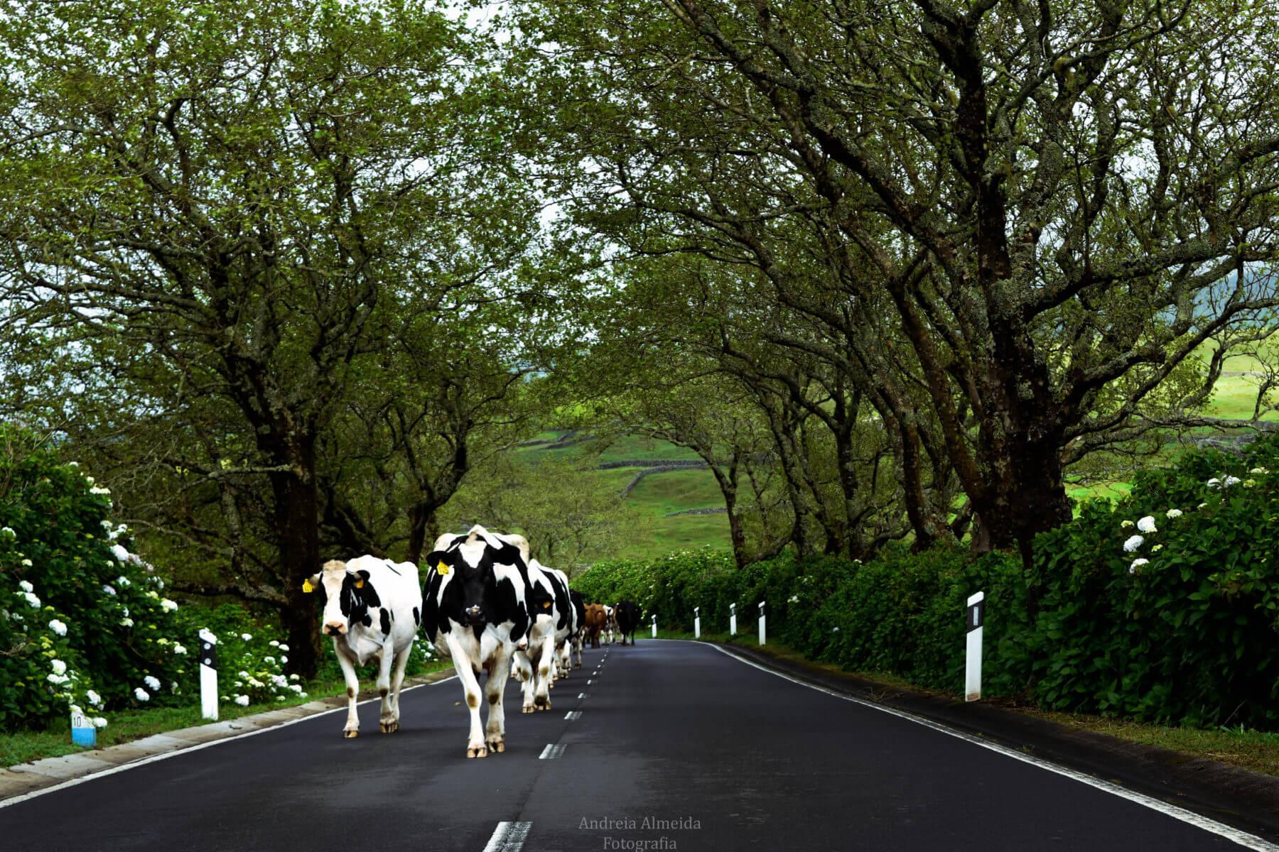 Pelas ruas da ilha da Terceira