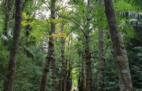 Entre árvores