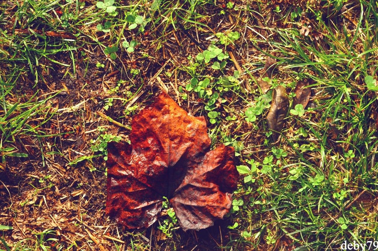 Outono – Outubro – Adega – Biscoitos