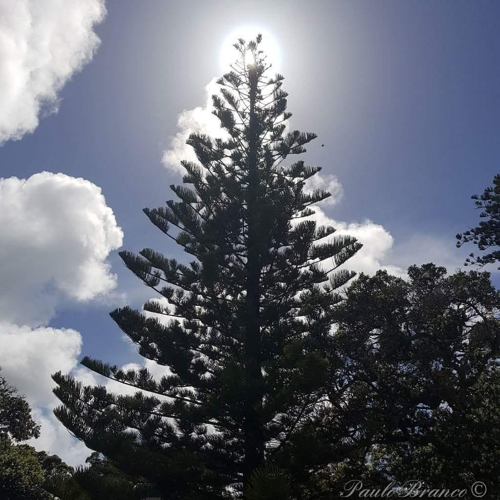 A simple tree