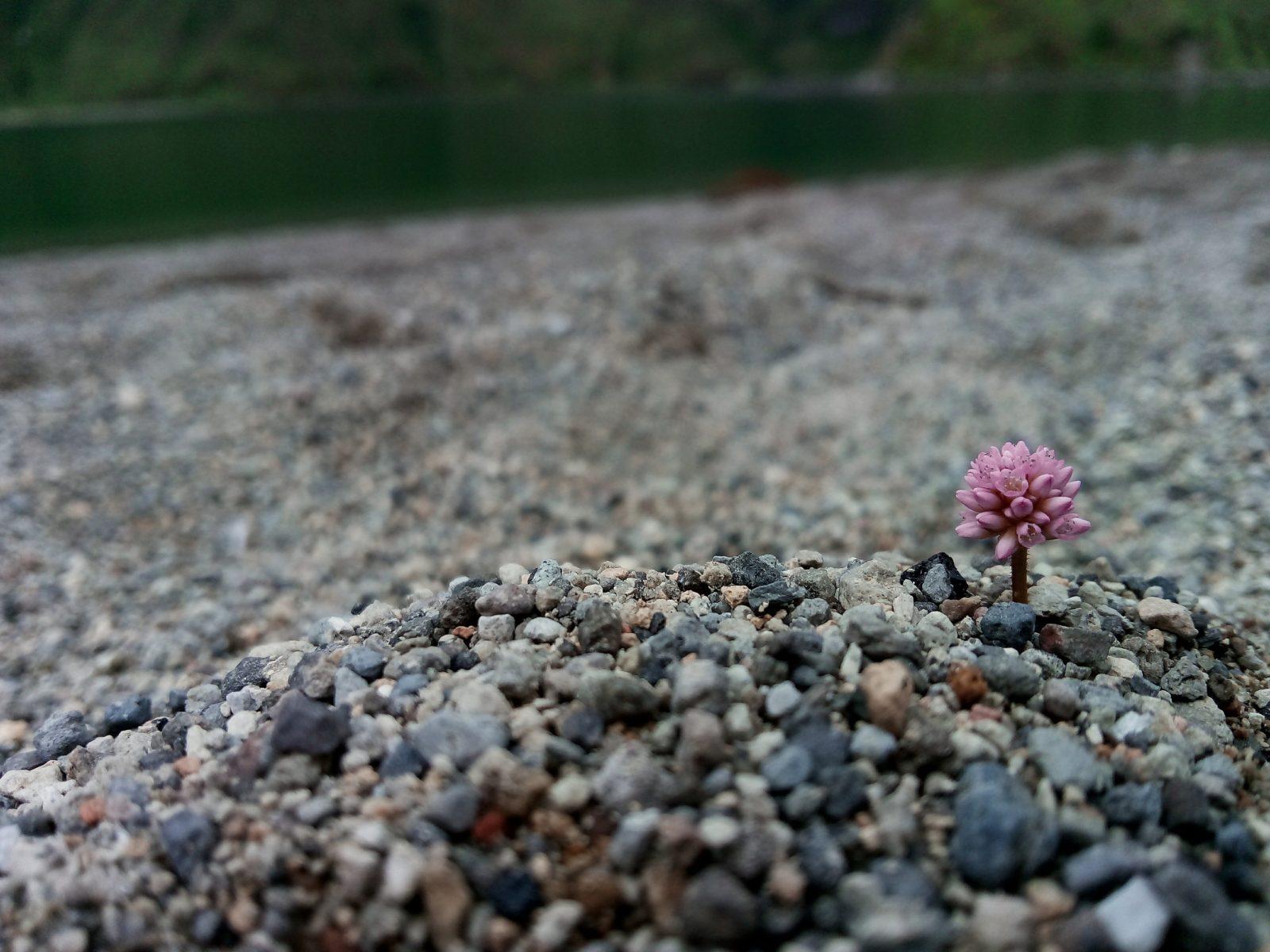 Pequena Flor