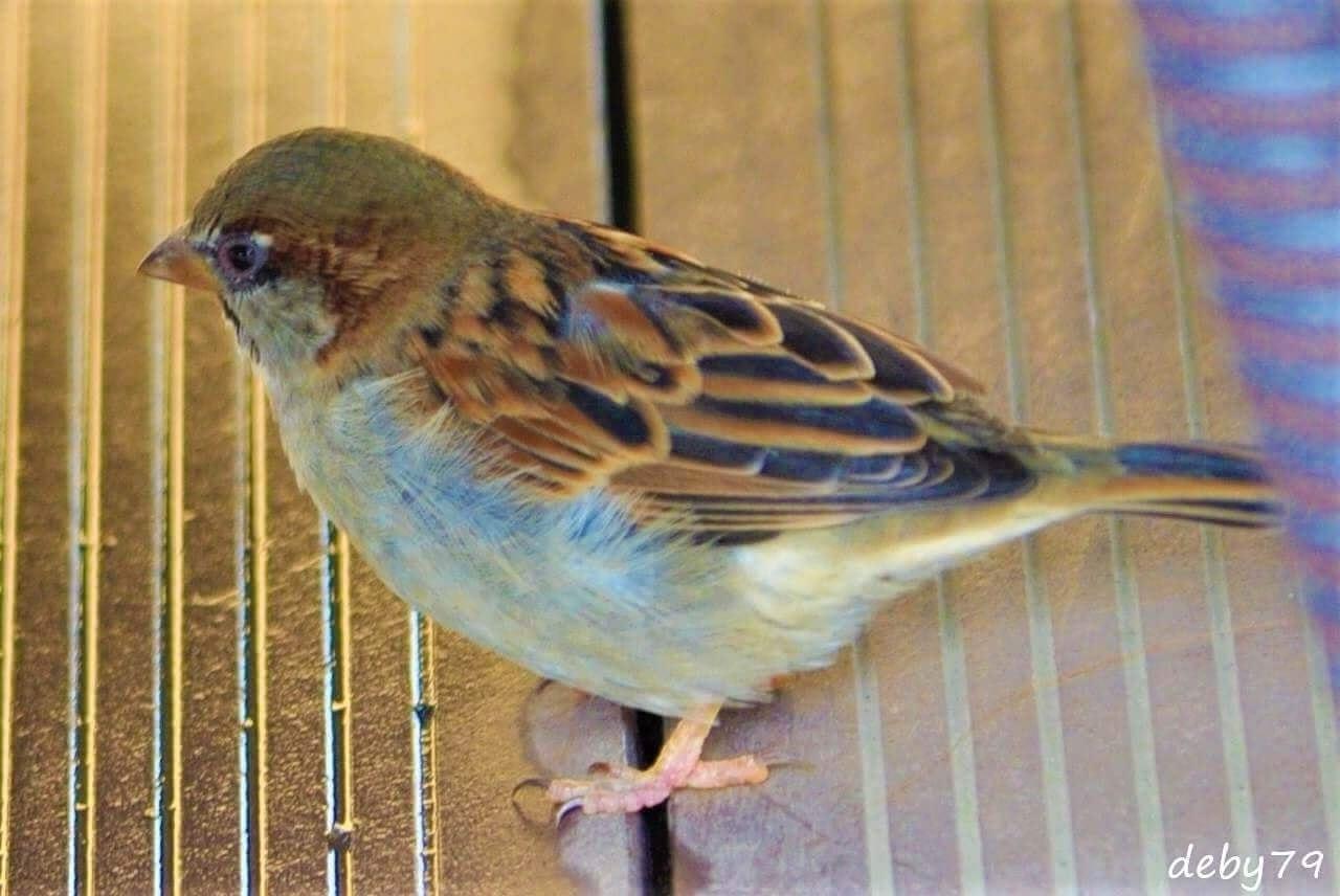 Pássaro Livre – Parque Terra Nostra