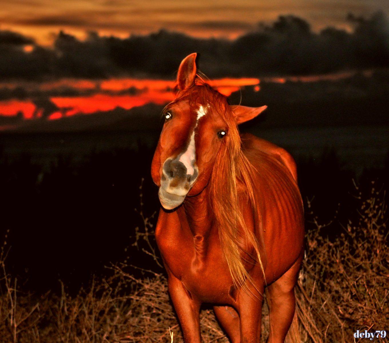 Cavalo – Pôr do Sol – Cinco Ribeiras