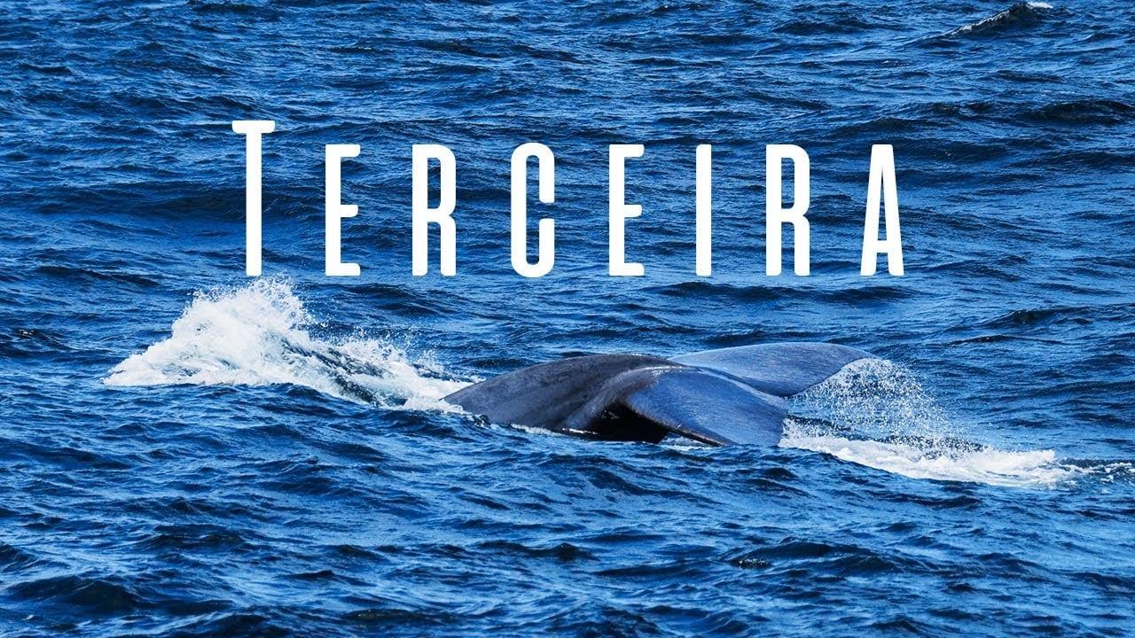 Visitando a Ilha Terceira – Baleias Azuis e Paisagens