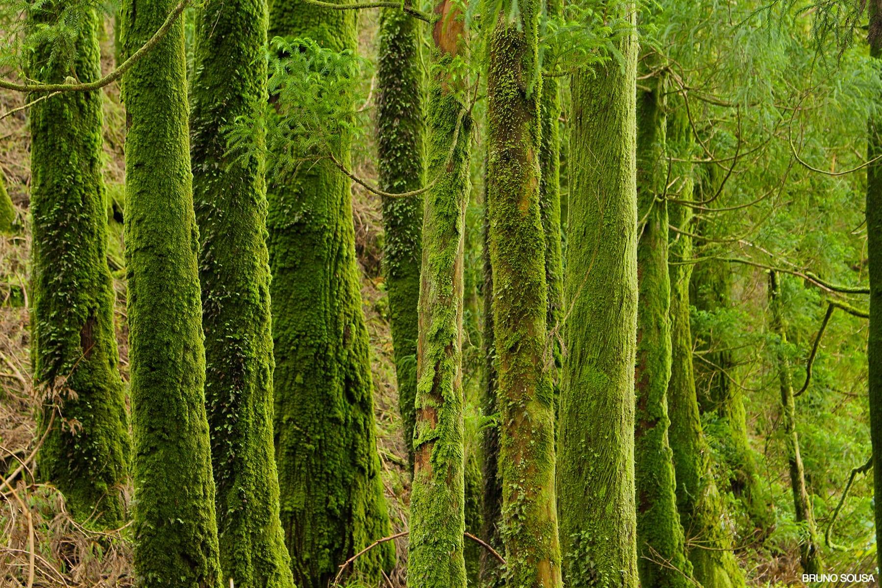 Verde – Detalhes da Natureza