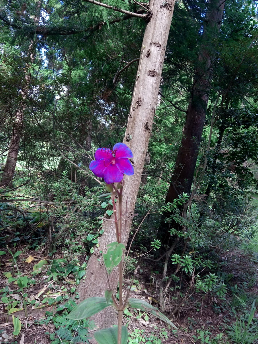 Lonely Flower.
