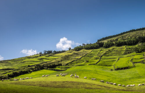 Rural Tourism in the Azores: what it is, benefits and Azorean Houses