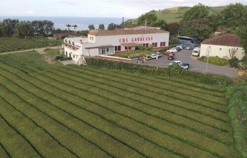 Chá Gorreana - Plantação, Fábrica e Museu - São Miguel, Açores