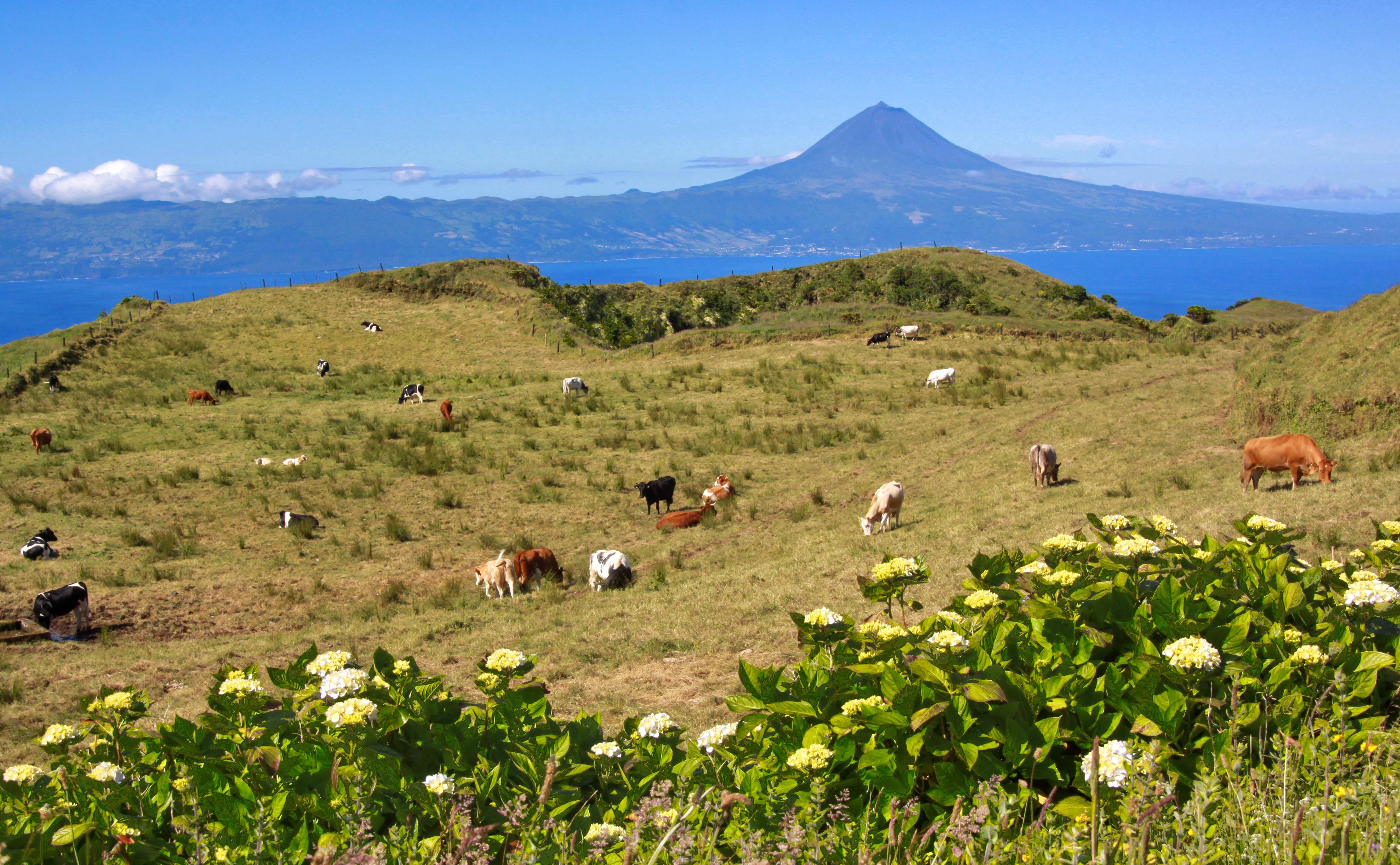 Pico da Esperança - São Jorge