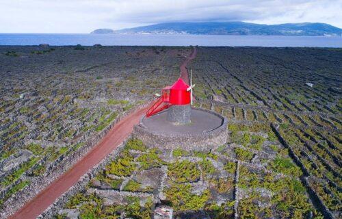 Vinhas Criação Velha - Ilha do Pico - Açores