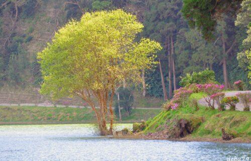 Lagoa das Sete Cidades – São Miguel