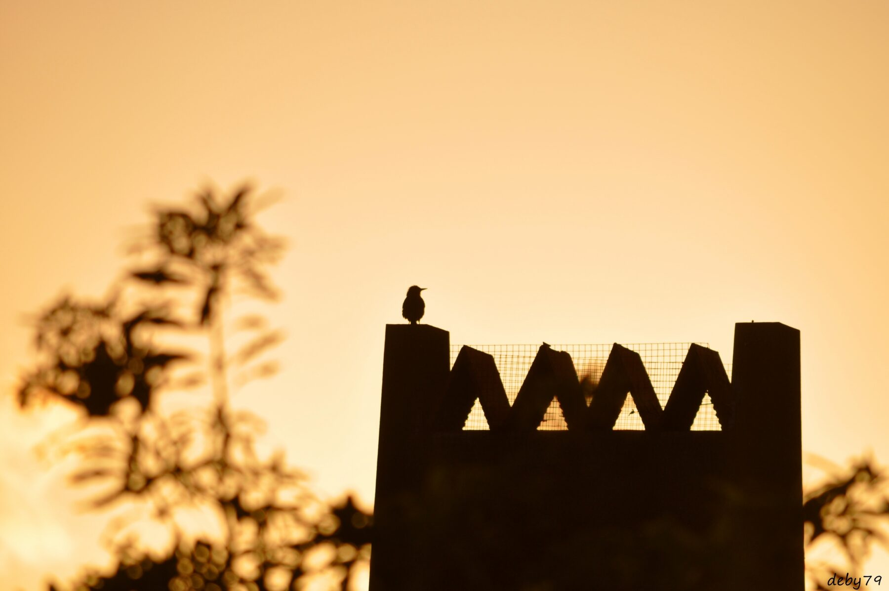 Serretinha – Ilha Terceira – Olhar de pássaro