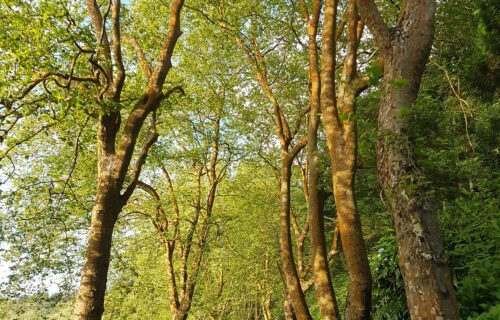Caminho entre Ribeira Grande e Algarvia