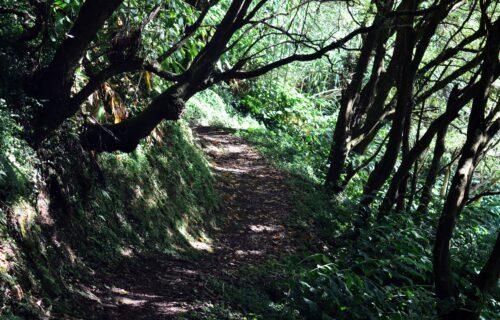 Quiet Paths