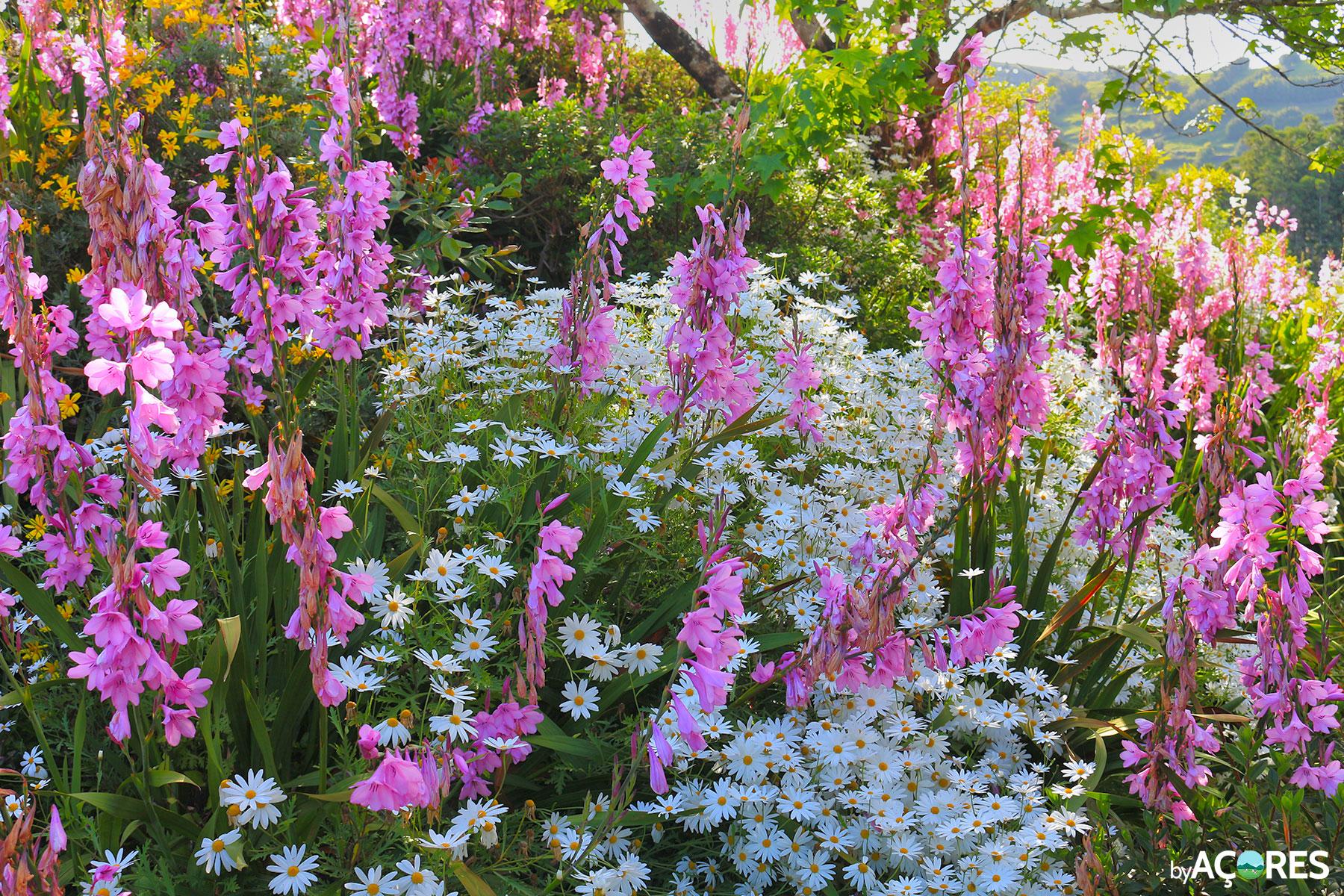 Flores no Miradouro da Ponto do Sossego