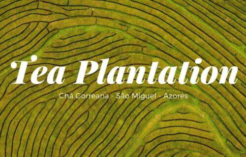 Imagens incríveis da Plantação e Fábrica de Chá Gorreana