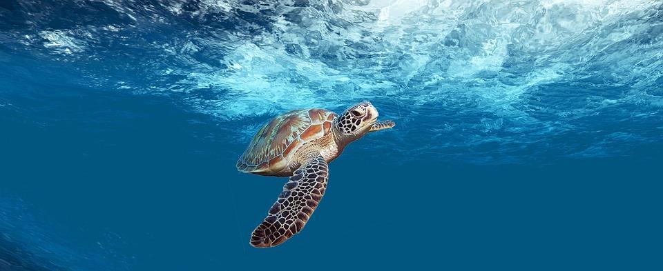 Mergulho nos Açores