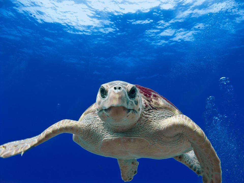 Mergulhar nos Açores