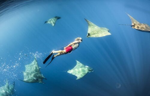 Between the Mantas