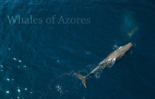 Baleias e Golfinhos