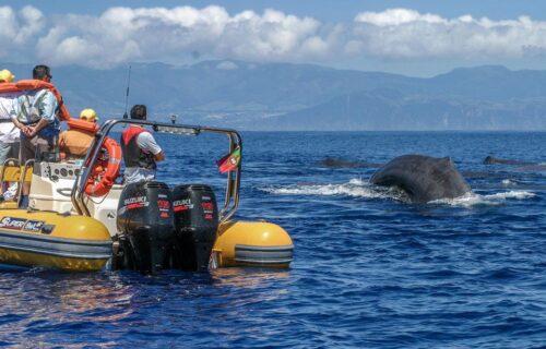As 10 actividades e tours mais procurados pelos portugueses nos Açores