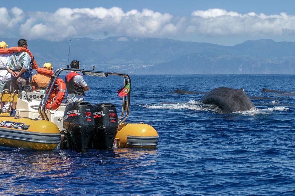 Tour Observação de Cetáceos - Açores