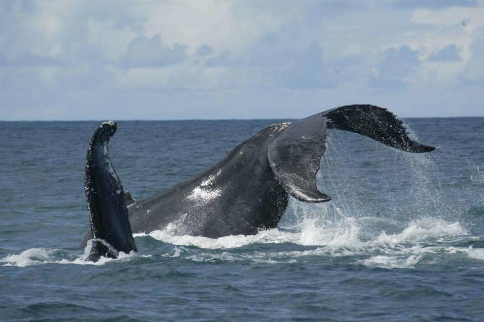 Observação de Cetáceos Açores