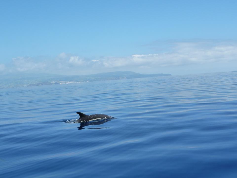 Observação de Cetáceos - Açores