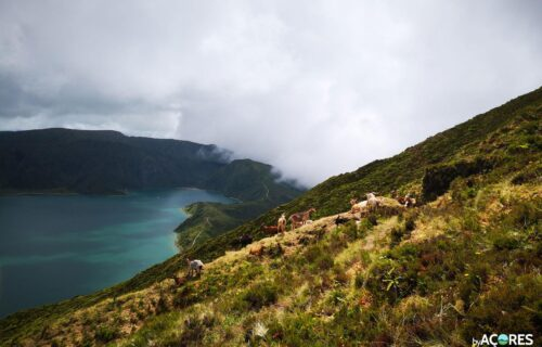 Cabras – Lagoa do Fogo