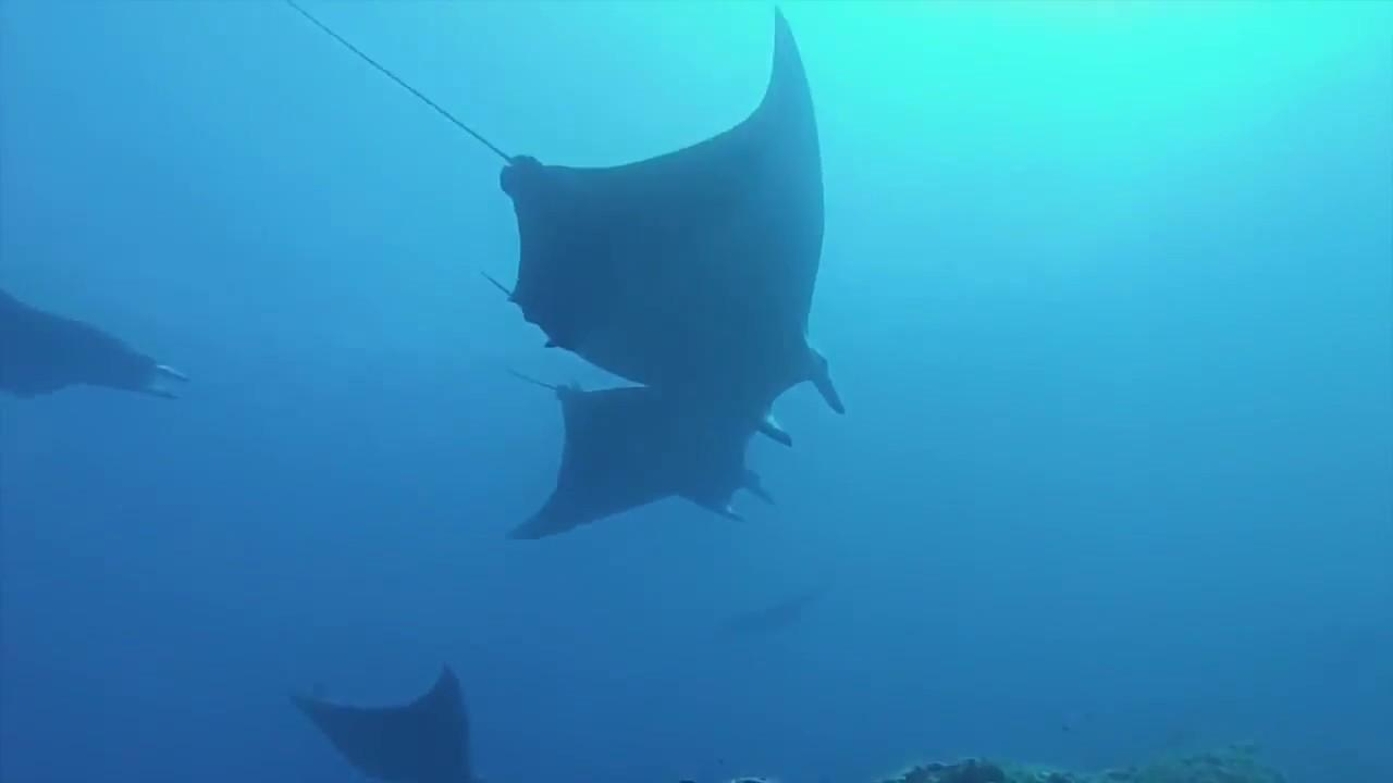 Nadando com Mantas