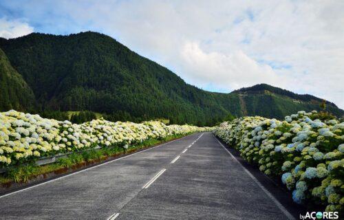 Estrada Sete Cidades Hortênsias