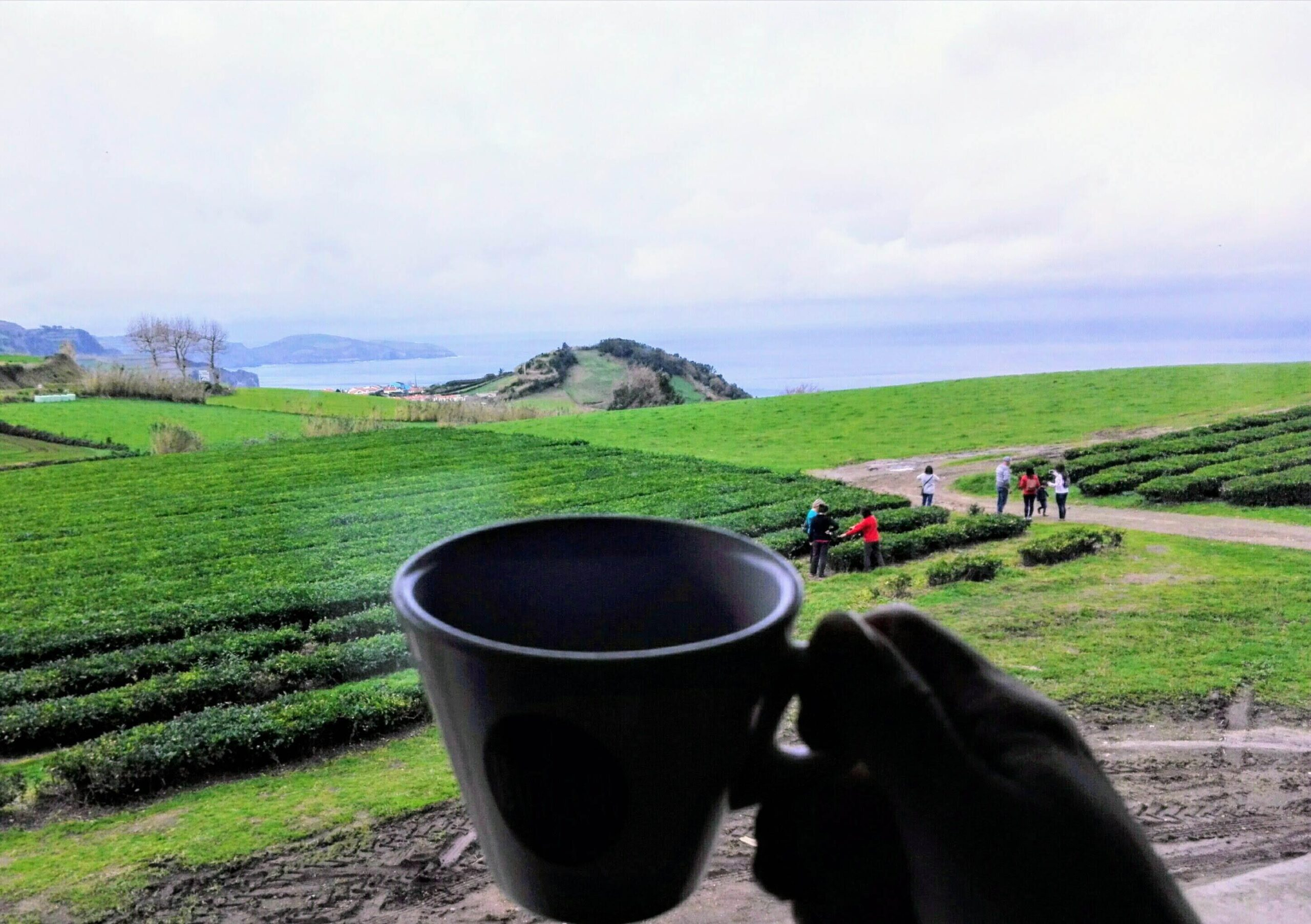 Tea time –  Gorreana
