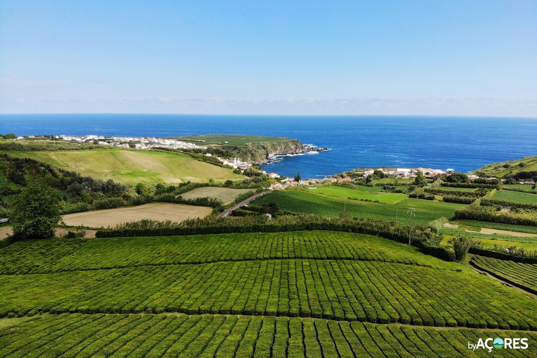 Chá Porto Formoso – Vista Aérea IV