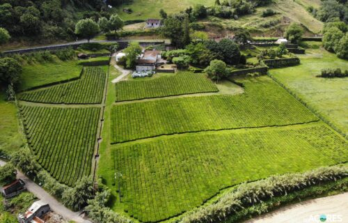 Chá Porto Formoso – Vista Aérea I