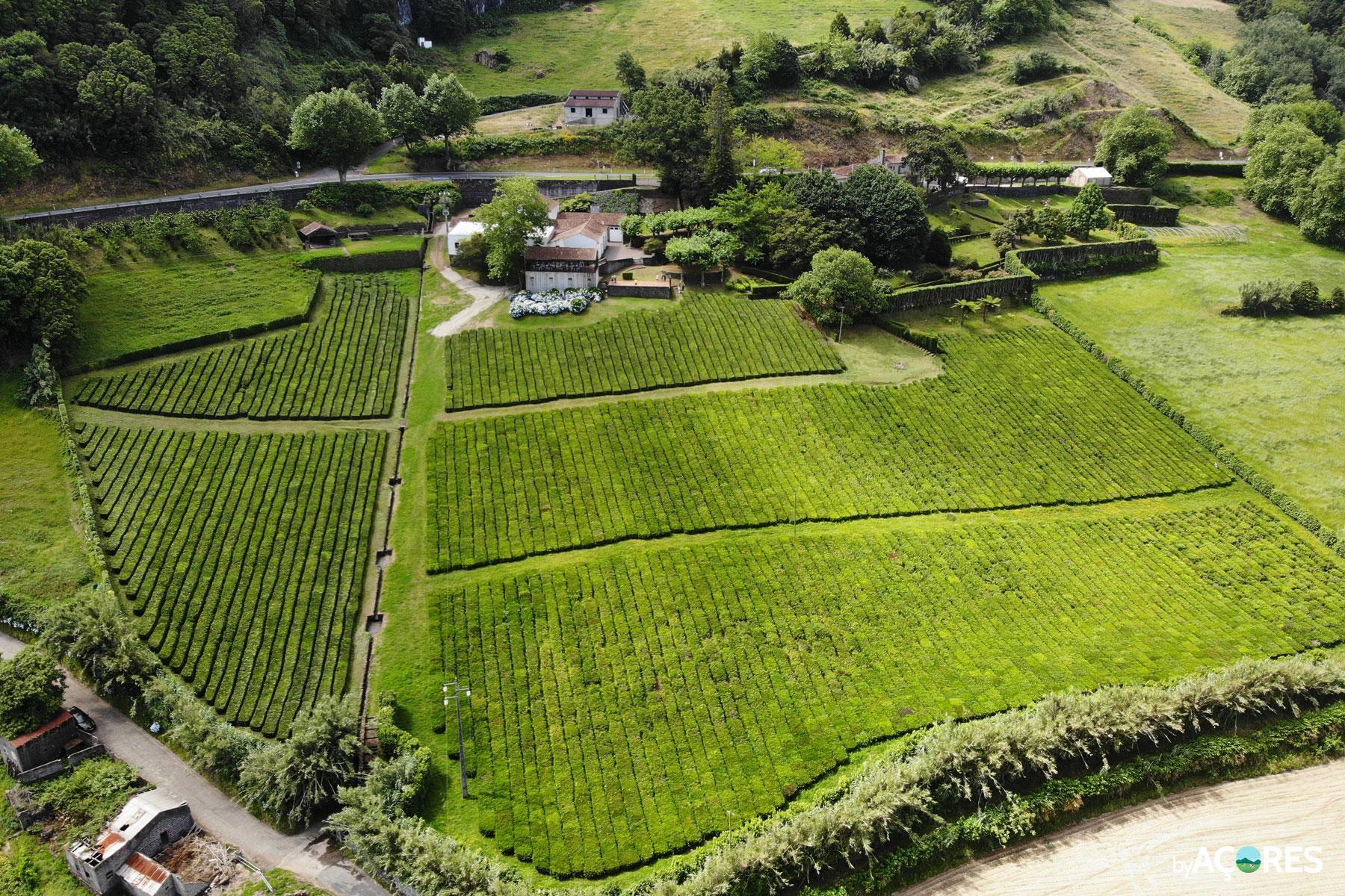 Chá Porto Formoso - São Miguel, Açores