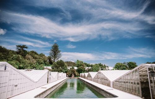 Plantação de Ananases Arruda – São Miguel