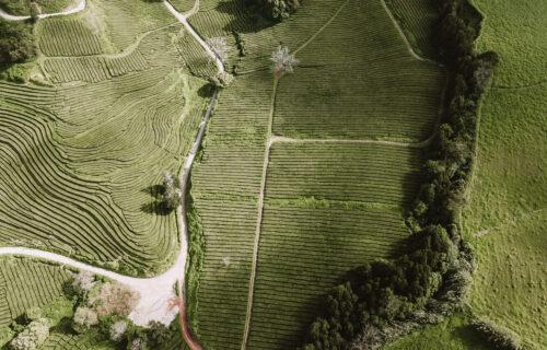 Plantação Chá Gorreana – Vista Aérea