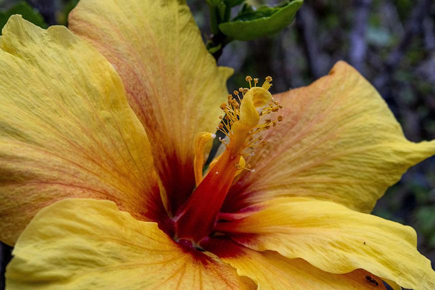 Jardim Botânico do Faial, Faial - Açores
