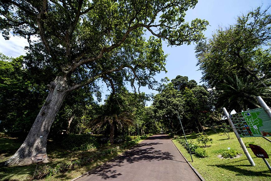 Jardim José do Canto - São Miguel - Açores