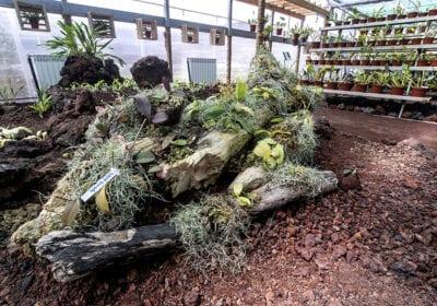 Orquidário - Jardim Botânico do Faial, Faial - Açores 08