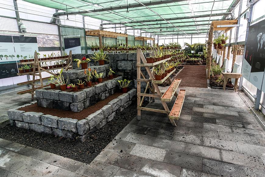 Orquidário - Jardim Botânico do Faial, Faial - Açores 07