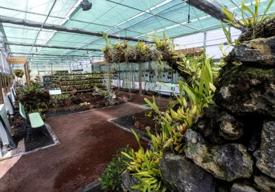 Orquidário - Jardim Botânico do Faial, Faial - Açores 03