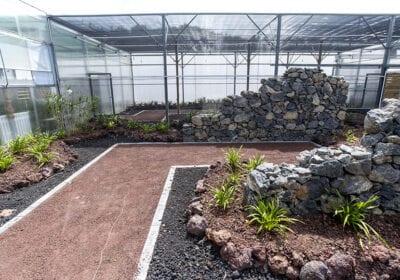 Orquidário - Jardim Botânico do Faial, Faial - Açores 02