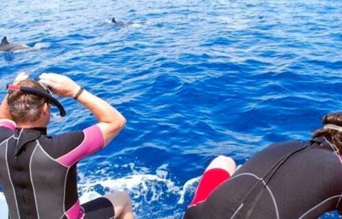 Natação com Golfinhos – Meio Dia
