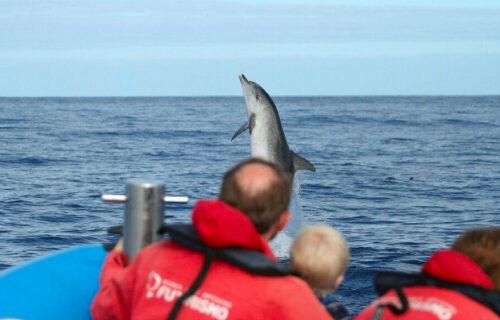 Observação de Baleias e Golfinhos – Meio Dia